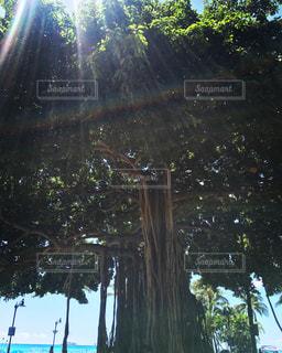 海,夏,木,屋外,太陽,緑,ビーチ,青,海辺,木漏れ日,樹木,未来,ヤシの木,ハワイ,Hawaii,夏休み,ワイキキ,waikiki,生命,夢,ポジティブ,希望,日中,休暇,生きてる,可能性,エネルギー,勇気,旅路,元気がでる,頑張ろ,悩み吹っ飛ばす