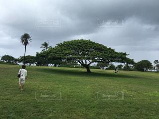 男性,自然,空,木,芝生,屋外,緑,人物,ハワイ,この木なんの木,夢,くもり,アロハ