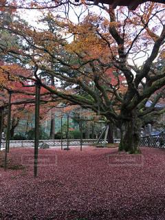 自然,秋,紅葉,赤,もみじ,福岡,インスタ映え