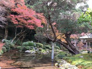 自然,秋,紅葉,赤,もみじ,インスタ映え