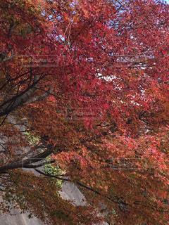 自然,秋,紅葉,赤,もみじ,山,福岡,インスタ映え