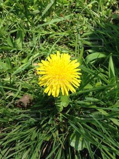 花,植物,未来,ポジティブ,草木,目標,可能性
