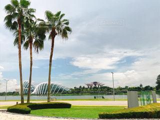 海外,青空,景色,旅行,シンガポール,ヤシ,草木,ガーデンズバイザベイ,スーパーツリー