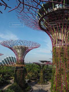 海外,青空,景色,旅行,シンガポール,シンボル,草木,ガーデンズバイザベイ,スーパーツリー,ガーデン