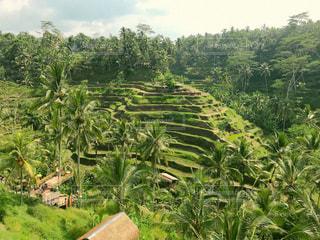 緑,青空,棚田,景色,観光,海外旅行,バリ島,インドネシア,ウブド,草木,ライステラス