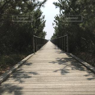 風景,木,樹木,道,未来,桟橋