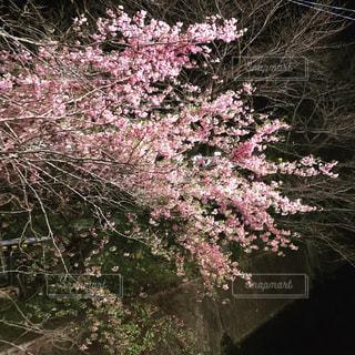 近くのフラワー ガーデンの写真・画像素材[1809784]