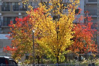 秋,紅葉,黄色,赤色