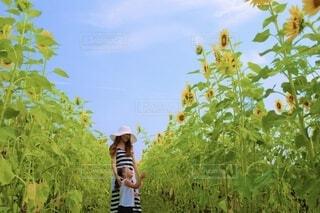 ひまわり畑の写真・画像素材[4679808]