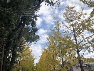 自然,空,屋外,樹木