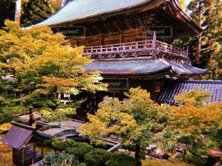 自然,建物,樹木,寺