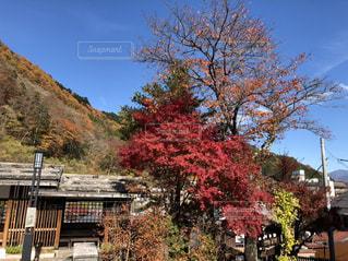 自然,紅葉,木,屋外