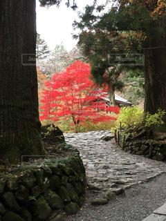 紅葉,赤,長野県,光前寺