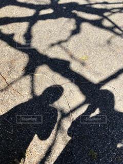 女性,公園,木,枝,散歩,影,人物,人,お散歩,晴れの日