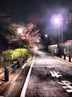 桜,夜,道路,花見,夜道