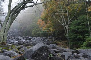 自然,公園,秋,紅葉,雨,屋外,奈良,山添村,鍋倉渓