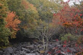 自然,公園,秋,紅葉,雨,屋外,観光,奈良,山添村,鍋倉渓