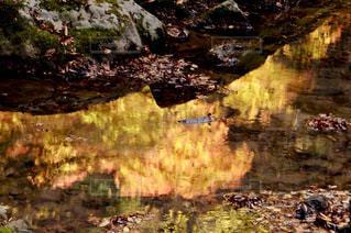 自然,公園,秋,紅葉,雨,屋外,森,三重,赤目