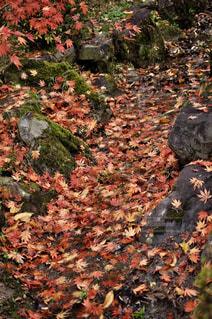 自然,公園,秋,紅葉,屋外,森,もみじ,観光,奈良,橿原神宮