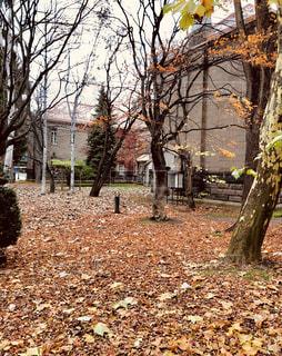 秋,紅葉,北海道,旅行,札幌,大通公園