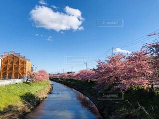 川散歩の写真・画像素材[3254743]