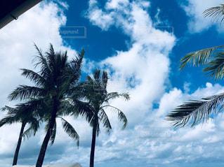 グアム旅行の写真・画像素材[3304013]