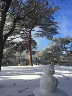 雪の写真・画像素材[56290]