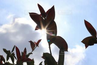 空,屋外,太陽,植物,光