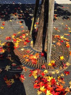 落ち葉の写真・画像素材[1616192]