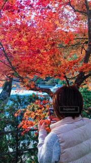 紅葉を撮る人の写真・画像素材[1624093]