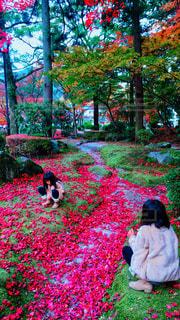 もみじの絨毯🍁の写真・画像素材[1645536]