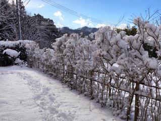 庭の雪の写真・画像素材[1657881]