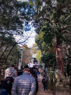 ツリー横の通りを歩く人々 のグループの写真・画像素材[1728173]
