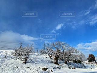 雪景色❄️の写真・画像素材[1756322]