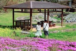 春の散歩の写真・画像素材[1979690]