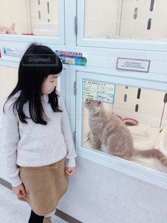 猫,ファッション,子供,女の子,ペット,ベージュ,お揃い,9歳,ペットショップ,ネコ,ミルクティー色