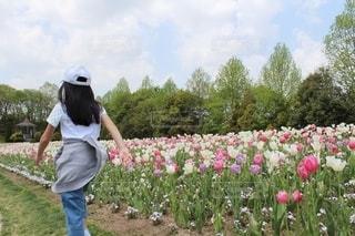 風景,空,公園,花,屋外,歩く,帽子,散歩,チューリップ,子供,女の子,人物,人,10歳,草木