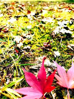 緑と赤のコントラスト♡の写真・画像素材[1604470]