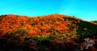 空,秋,紅葉,カラフル,山,景色,観光,旅行,11月,インスタ映え,鏡野町,ホトジェニック,岡山県北