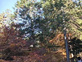 秋,紅葉,京都,永観堂