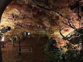 秋,紅葉,木,京都,永観堂