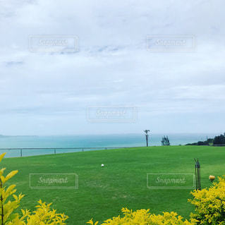 緑の芝に映える黄色の花と青い海の写真・画像素材[1555546]
