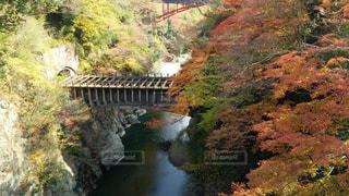 自然,風景,橋,紅葉,景観