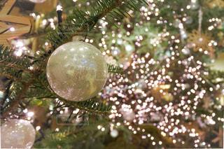 キラキラ輝くクリスマスツリーの写真・画像素材[2817244]
