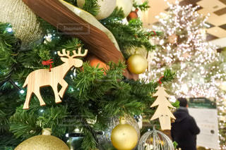 煌めくクリスマスツリーの写真・画像素材[2817253]