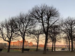 自然,風景,空,公園,建物,屋外,太陽,夕焼け,光,樹木,旅行,旅,夕陽,草木