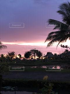 日没の前にヤシの木の写真・画像素材[1860332]