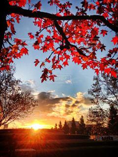秋,夕日,紅葉,赤,景色,美しい,横浜,桜木町