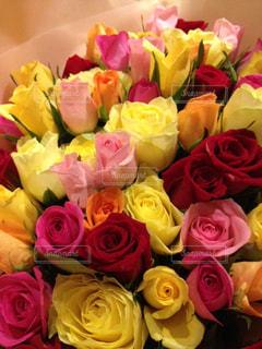 バラの花束の写真・画像素材[1560808]