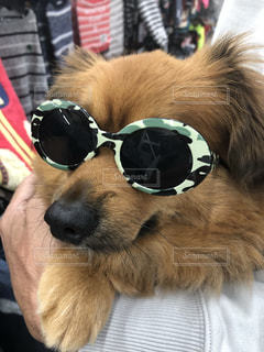 サングラスをかけている犬の写真・画像素材[2761902]